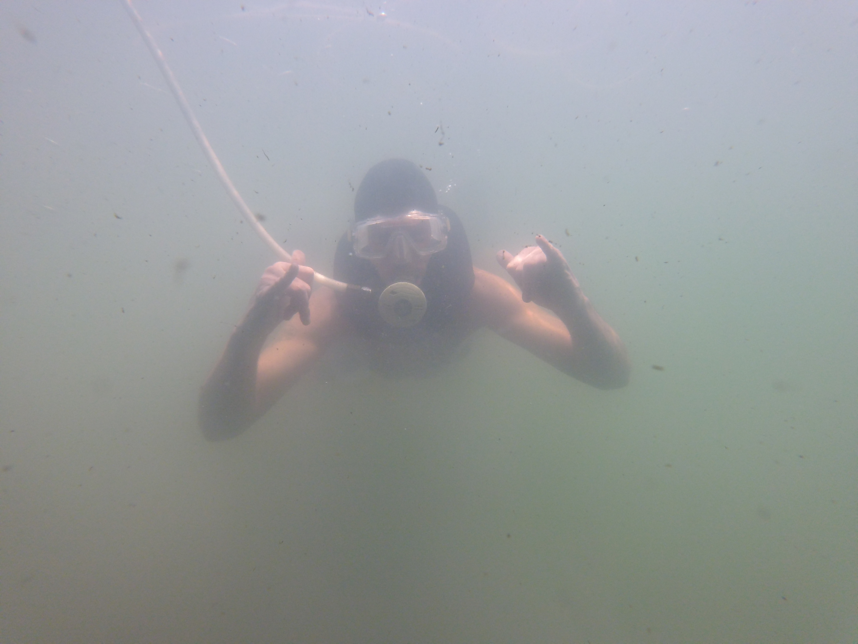 dive services in pinellas county florida