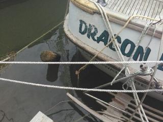 irma boat damage clearwater fl